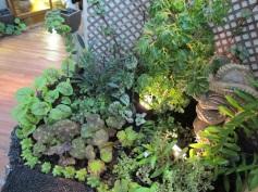 Kuka-ilimoku in the Ku Garden