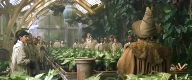 Greenhouse-014 copy