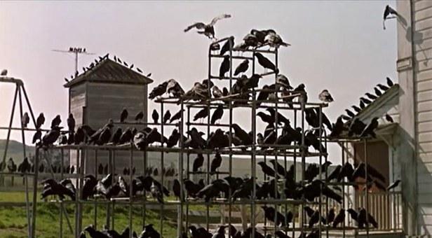 Playground equipment with birds