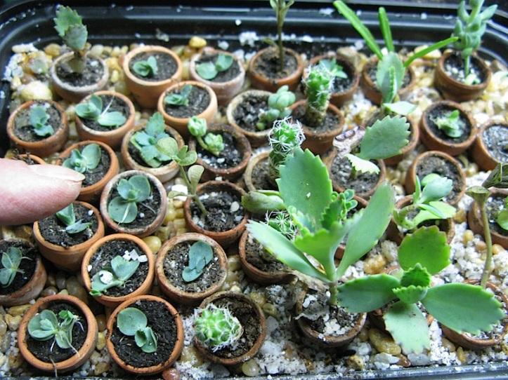 miniplants1