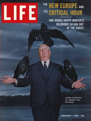 birds-life
